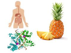 enzimi, crudismo
